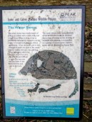 The water shrew - information sign