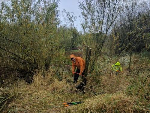 Creating willow tit habitats