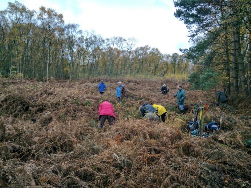 Getting started clearing around heather