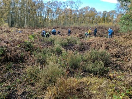 Work in progress clearing around heather