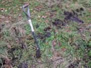 Removing blackthorn root from grass