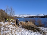 Volunteers at work - coppicing willow