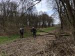 Volunteers clear fallen tree
