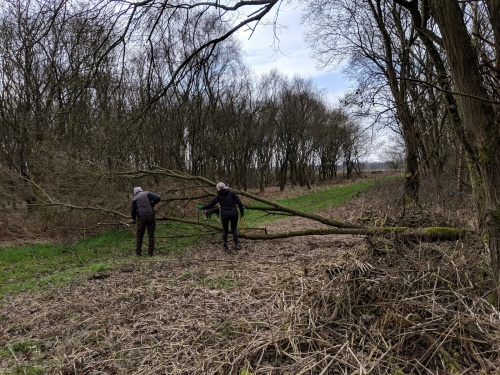 Volunteers clear fallen tree