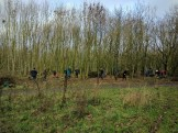 Volunteers coppicing