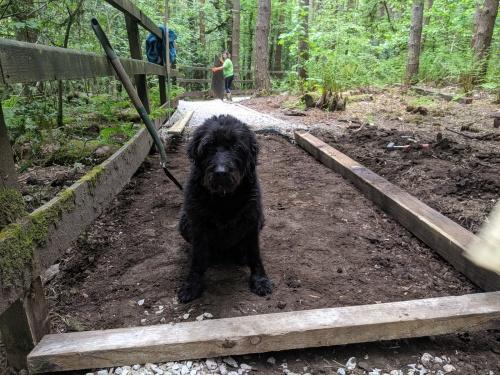 Canine volunteer