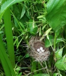 Unexpected bird's nest
