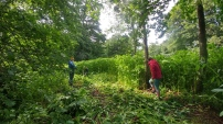 Volunteers clearing Himalayan balsam
