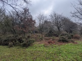 Gorse removal - a cleared area