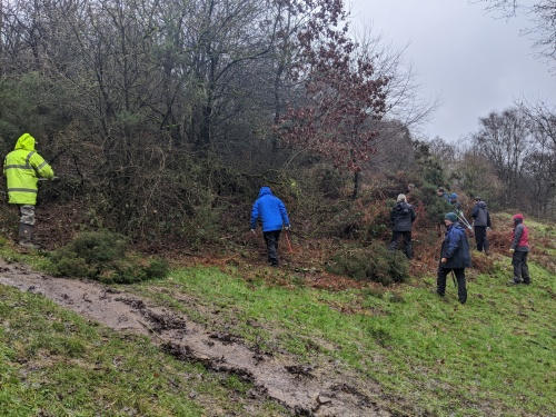 Gorse removal - getting started