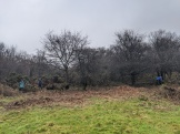 Gorse removal - work in progress